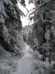 The track to Zwieselberg